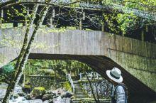 浙江小众旅行地 | 隐藏在森林深处的乌岩岭 强烈推荐一个适合自驾游的小众秘境——乌岩岭 这是一座隐藏