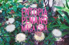 """""""槟城蝴蝶园""""的英文名为Entopia,是马来西亚最大的蝴蝶园,这里聚集了成千上万只各个品种的美丽蝴"""