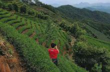 2019.08.10下午,应朋友相邀驱车顺着弯弯狭窄的山道,来到位于海拔577米,友人种植的千亩茶田