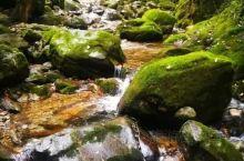 牛背梁国家森林公园位于柞水县营盘镇朱家湾村,海拔1000--2802米,总面积2123公顷,距西安4