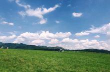 虽比不上内蒙古大草原一马平川的辽阔,但因山峦的衬托,画面有了层次。满目生机盎然的绿色,让人看见恒久不