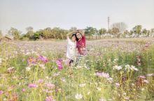 """大美东湖/梯田花海: 月月有花看,季季有花展。 赏花季已经到来, 你准备好了吗? 十一期间东湖绿道"""""""