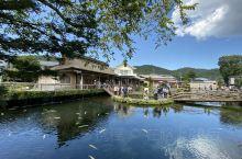 号称日本九寨沟的忍野八海,也是世界自然文化遗产,这里免费门票,和国内很多旅游景点不一样,来这里参观旅