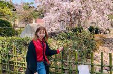 去前无感去后迷上的日本! 樱花季真的太美好了! 上野公园你不要错过!