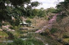 公园就位于大本堂的后面,是一个大园林,其中最值得欣赏的是点缀文殊池和龙树池周边的花草树木,酿造出四季