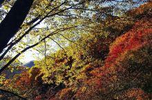 太平峪,峪中山水景观奇特,多瀑布、急流、险滩,曾是唐王朝权贵观花避暑的山水乐园。最让游客流连忘返的就