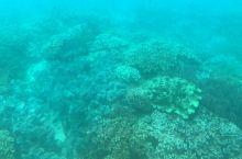乘坐ORCA号观看冲绳的海底世界