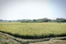 周末去了高淳漫步,景色不错,放松心情。