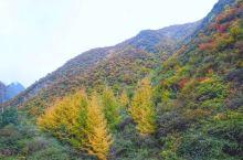 兰州云顶山秋色,没想到吧我大兰州秋天也能层林尽染,美丽的风景其实就在身边。