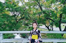 大阪周边奈良公园,小朋友的最爱。  这里是野鹿,野鹿哈。。  不知道网上那些可爱小鹿的视频咋拍的,我
