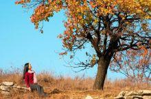 醉美安丘   流连忘返           又到霜叶醉美时,树上的黄叶和红叶,在西风的吹拂下,招摇在