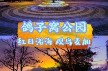北戴河|鸽子窝公园红日浴海观鸟麦加 景点信息 景点:鸽子窝公园 位置:河北秦皇岛北戴河区鸽赤路25号