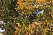 新龙国家生态森林公园