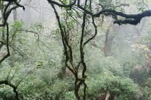 桂林兴安县的猫尔山值得一去,大自然风光,天气氧吧,景色宜人,有着原始森林的感觉,可以从桂林出发两日游