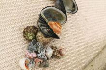 东郊椰林的海滩不大,不过可以捡到贝壳和海螺,大的不多,有好多好看的小贝壳。海边的酒店住宿条件还可以,