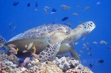阿罗娜海域是潜水者的圣地,海水没有受到污染,洁净透明,远望呈现几种不同的蓝色,岸上林木郁郁葱葱。冬季