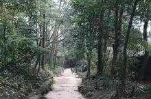 """青城山风景优美,素有""""青城天下幽""""的美名,它那山林的幽深,古道的幽静,山花的幽香,鸟鸣的幽趣,溪流的"""