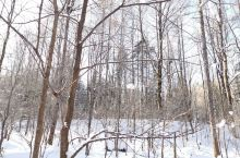 雪谷穿越到雪乡,一步一风景,美得洁白无瑕,15公里的路程,走起来其实并不太累,我们一家三口沿途嬉戏慢