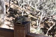 普达措国家公园实用tips: 普达措国家公园由碧塔海,属都湖和弥里塘亚高山牧场组成。因为距离都较远,