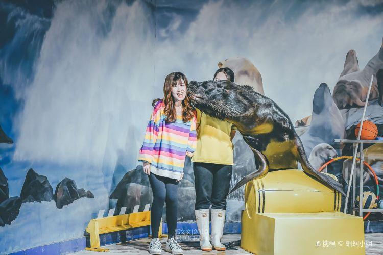 Zhangjiagang Dream Ocean Kingdom3