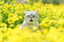 罗平的油菜花开的非常早,基本春节后就能看到成片成片的油菜花景色。刚过了春节,成千上万的游客就源源不断