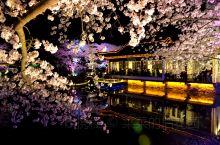 无锡鼋头渚樱花节绝美夜景
