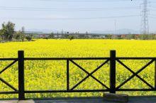 三月的油菜花,开了漫山遍野!  田园风光•林垟   AL6•后期  2020.3.24  活在這珍貴
