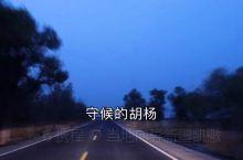 守候的胡杨吗……沙漠公路吗…… 渔湖