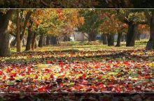"""什川古梨园位于兰州市皋兰县境内,有着""""中国第一古梨园""""的称号!这里的古梨树都有300多岁了,百年以上"""