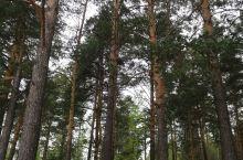 叶卡捷琳堡因位于欧亚分界线而闻名于世。俄国地理学家塔季肖夫发现受气流影响,乌拉尔山脉两侧动植物差异明