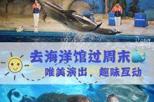 不冷静の泉城欧乐堡 / 与海洋动物亲密互动,圆你关于海洋的梦  景点名称:泉城海洋极地世界 地址:德