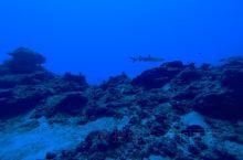 潜导:在蓝洞看见白鳍鲨太难得了,感动不? 我:不敢动 不敢动…