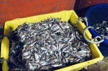 ---暹粒最大的湖鲜交易码头,今早凌晨四点到达该处已人头拥拥,一批批鱼贩子等候渔船回来,他们抢在最早