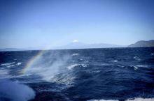 駿河湾深海生物館   骏河湾轮渡,携程上竟然找不出这个地点链接。 该轮渡可谓静冈游必选景点,在小丸子