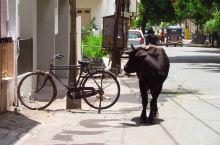 拉杰果德(Rajkot)是印度西部古吉拉特邦第四大城市,位于古吉拉特邦索拉什特拉(Saurashtr