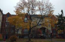 渥太华大学校园的秋色