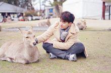 去日本的关西地区游玩的话,只要有点时间,喜欢动物的朋友都强烈建议前往奈良。 这是古都,更是一个开放的