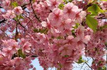 金匮公园作为锡城一个免费的徒步公园,最近名气越来越大,作为一个免费看樱花的公园,比起鼋头渚一点也不差