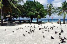 第一次写游记以马尔代夫作为开篇,也算是值得。 蓝天,碧海,椰林,沙滩,所有的风景不用滤镜拍出来都是那