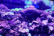 香港海洋公园海洋世界,五彩缤纷的热带鱼,多姿多彩的珊瑚,叫不出名字的海洋生物……从外面炎热的天气进到