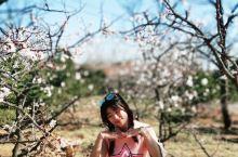 「花花大孤山」听说大孤山杏花节名气四溢,我已对大孤山觊觎已久。说不清原因,道不明究竟,只能说……缘分