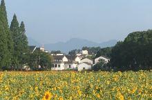 诸葛亮后裔聚居地,8月初去的,天很热,游客不多。村庄布局很有特色,按诸葛亮八阵图来布局的,村中水塘很