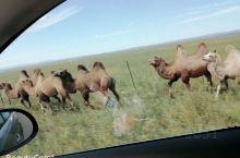 呼伦贝尔大草原欢迎你们的到来,在这里带你玩遍草原。