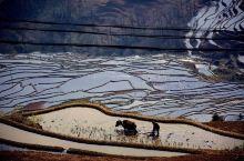 【浓墨重彩中国画~元阳哈尼梯田】  红河哈尼梯田位于云南省南部,总面积约100万亩,是勤劳的哈尼族人