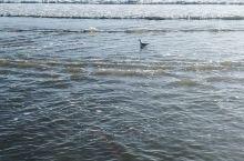 北戴河的清晨,风和日丽,