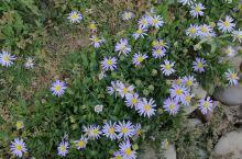 森林公园静开的野花也别有情趣!