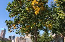 青岛五四广场、奥帆入口处的法国梧桐、银杏树等的叶子,正在逐渐变成金黄色,期待未来……