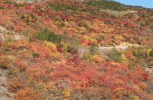 从延庆黑峪口村有一条通往赤城艾河滩村的三级公路,沿途的秋色可人,现在正是红叶佳期。