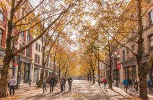 西雅图这座城市真的充满了文艺与浪漫气息!立冬,漫步在铺满金色落叶的街巷,移步易景让人如痴如醉……坐在