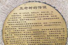 中国千年银杏谷